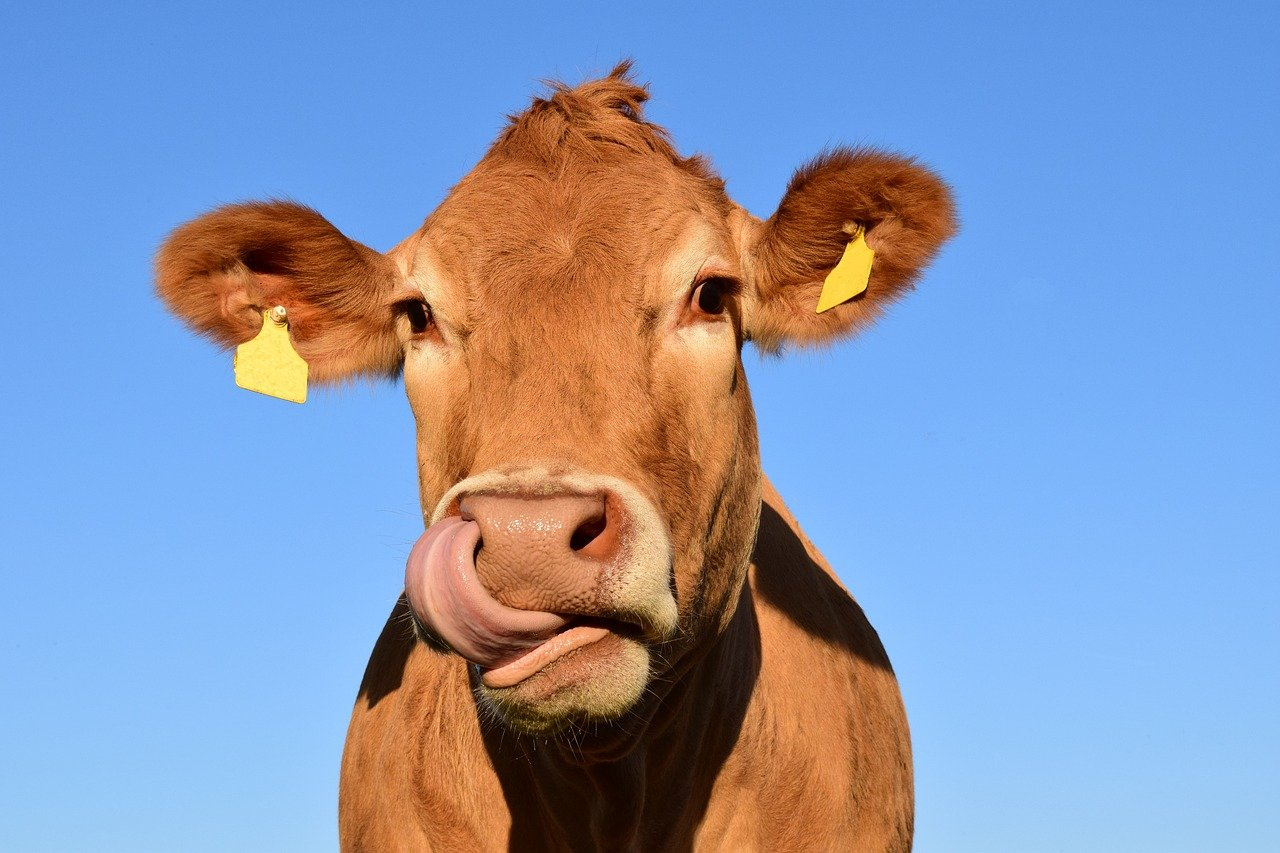 According to a study, bacteria found in cows' stomachs can degrade plastic